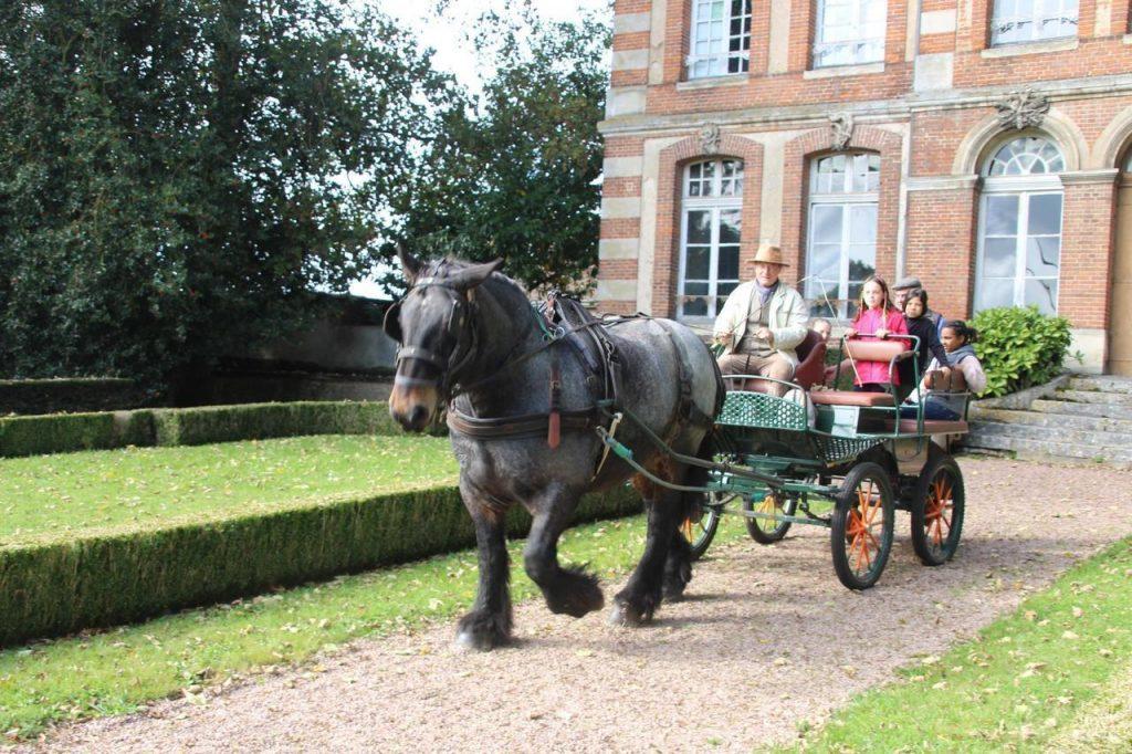 Jacques Gosselin rélaise une démonstration d'attelage avec Action son cheval ardennais